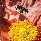 Poppy landing pad by Celeste Mookherjee