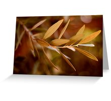 Visible Peace - an Olive Branch Greeting Card