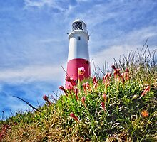 Portland Bill Flowers by CHINOIMAGES