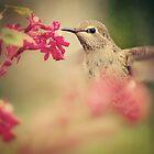 Hummingbird by smilingrain