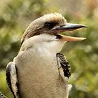 Laughing Kookaburra by SuddenJim