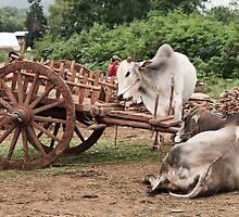 Burmese Days by Kevin Hayden