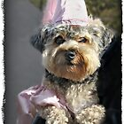 """Poochie Princess"" by Gail Jones"