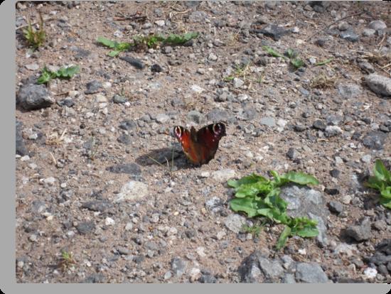 Butterfly in sun by Eleanor11