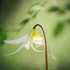Fire Flower by smilingrain