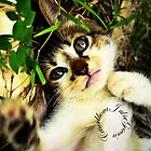 playful kitty by Julie Garcia
