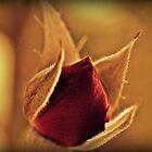 Rosebud by Susan Littlefield