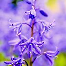 Bluebell by JEZ22