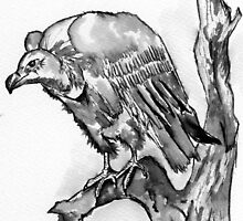 Vulture from Africa by Elizabeth Kendall