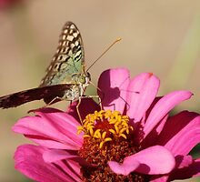 Butterfly On A Flower by Paula Guy