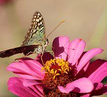 Butterfly On A Flower by Paula Guy