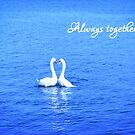 Swans in Love: Always together by Susan  Wellington