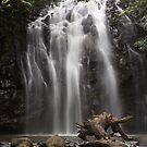 Ellinjaa Falls' Afternoon by Yuko  Yamada