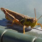 Mr. Grasshopper by Keala