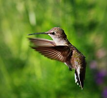 Give me a Hug - Hummingbird by Cassandra Scarborough