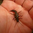 Large Stonefly Nymph in Hand by Chad Burrall