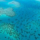 Great Barrier Reef by nataliemack