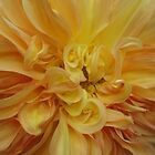 Dahlia, abstract golden peach by Adrienne D. Wilson