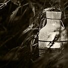 A Lantern In The Night by Tracy Jones