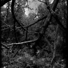 The Woods by gjameswyrick
