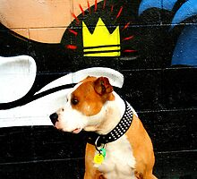 Graffiti dog by Aumareva Aumareva