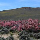 Pink and Yellow Mountainside,outside Reno Nevada USA by Anthony & Nancy  Leake