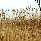 Reeds On The Hudson by SuddenJim
