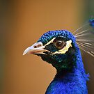 Peafowl male by M-A-K