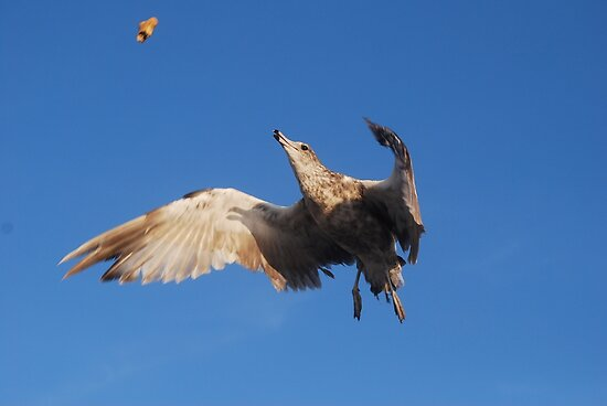 Mid Air Catch by Tori Snow