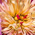 Peony Up Close by Otto Danby II