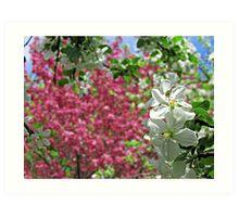 May Blossoms Art Print