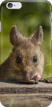 Field Mouse Watching by Georden