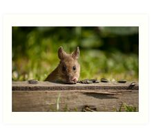 Field Mouse Watching Art Print