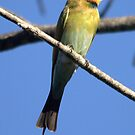 Bee Eater view by Maree Costello