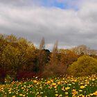 spring Landscape by orsinico
