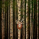 Deer hanging out in a forest by Alex Preiss
