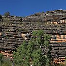 Divonian Reef @ Windjana Gorge WA by Mark Ingram