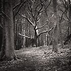 Dark Woods by Maybrick