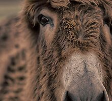 Face to Face by Adam Northam