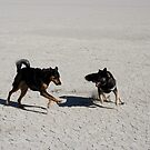 Playin on the Playa,Black Rock Desert,Gerlach Nevada USA by Anthony & Nancy  Leake