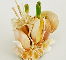 Garlic by Thomas Barker-Detwiler