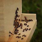 Beekeeping by lumiwa