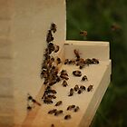 Beekeeping by lumiwa