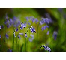 Vibrant Bluebells  Photographic Print