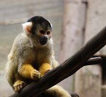 Squirrel Monkey by cs-cookie