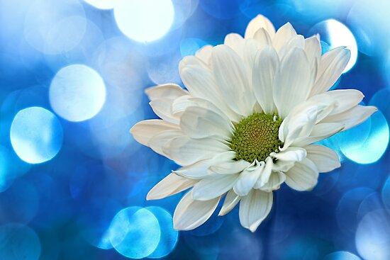 Celebrating Blue & White by micklyn