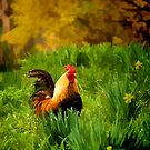 Rooster Bright Colors by KellyHeaton