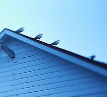 Seagulls on Rooftop by Paul Eekhoff