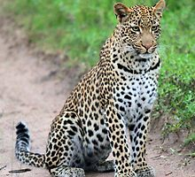 The beautiful Tutlwa female by jozi1