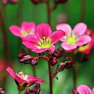 Littlel pink flowers by RosiLorz